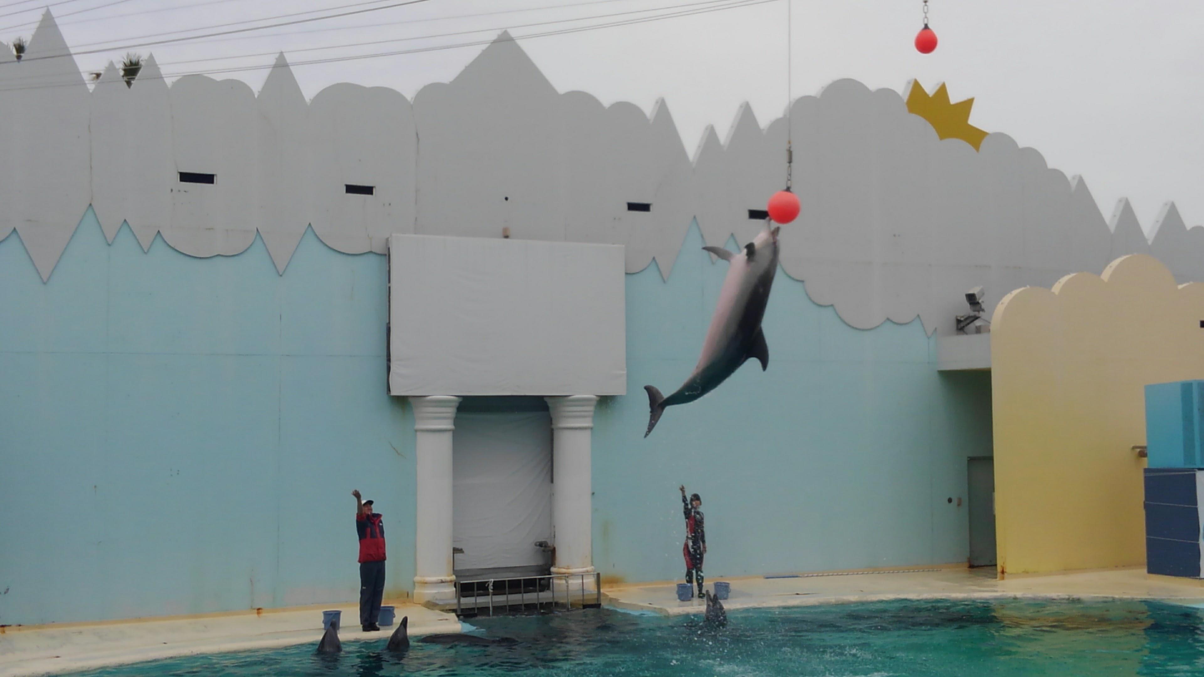 須磨海浜水族園のイルカショー
