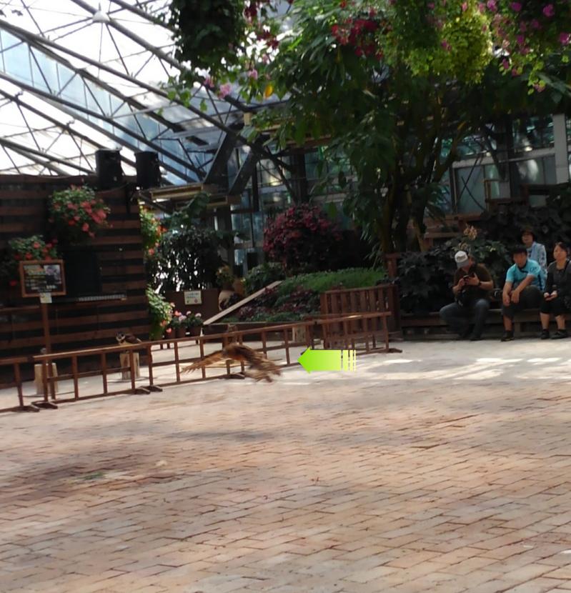 松江フォーゲルパーク フクロウの飛行ショーの様子