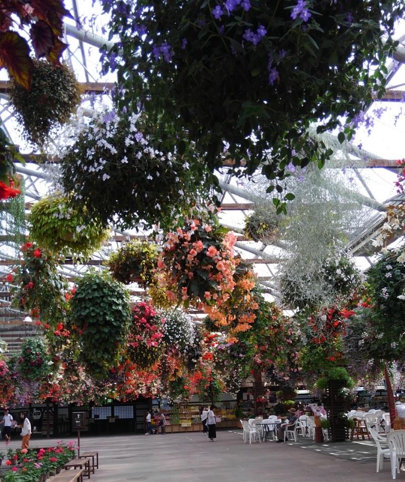 松江フォーゲルパーク花の展示の様子