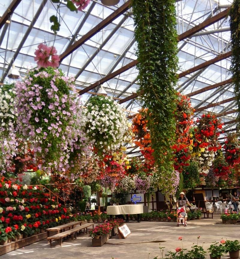 松江フォーゲルパークの花の展示の様子