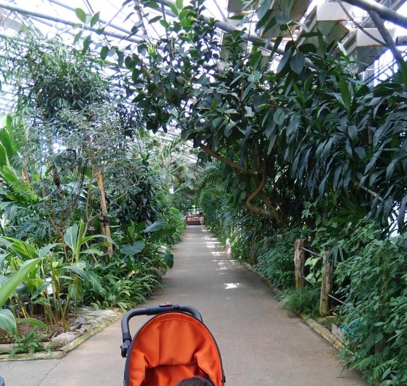 松江フォーゲルパーク 温室の様子