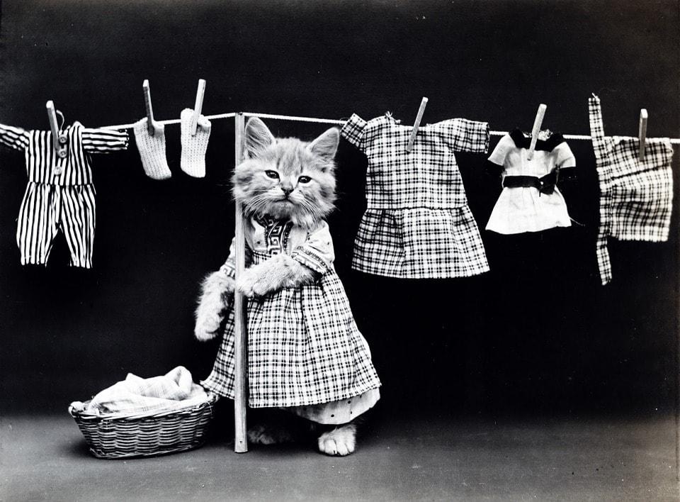 猫が洗濯物を取り込んでいるところ